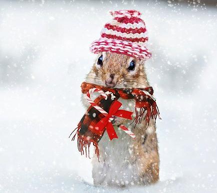 winter-2926825_640